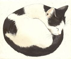 draw cat...good cat for a rock painting!