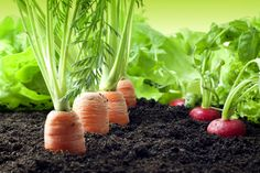 It's not too late to start your own veggie garden! Here are the late bloomers you can plant now to enjoy before the growing season ends. Raised Vegetable Gardens, Raised Garden Beds, Vegetable Gardening, Small Space Gardening, Small Gardens, How To Grow Small Garden, Organic Farming, Organic Gardening, Gardening For Beginners