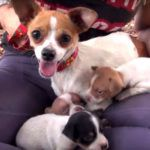 Whimpering Behind The Fence, What Was Hiding? - Dogisto - Dog News & Dog Videos
