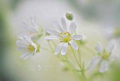 Spring Showers | by Jacky Parker Floral Art