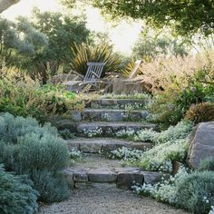 sweet alyssum and santolina naturally charm a rocky setting with shades of silver and white