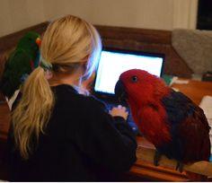 Bokskrivande på gång. Parrot, Bird, Animals, Parrot Bird, Animales, Animaux, Parrots, Birds, Animal