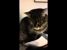 職人のようないぶし銀な表情でパラパラ紙をめくる猫。 | ねこトピ