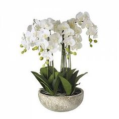 The Seasonal Aisle Kunstpflanze in Topf Orchidee Silk Orchids, Phalaenopsis Orchid, White Orchids, Orchid Pot, Orchid Arrangements, Orchid Care, Artificial Plants, Potted Plants, Trees To Plant