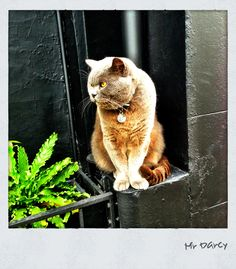 The much loved Mr Darcy of William St