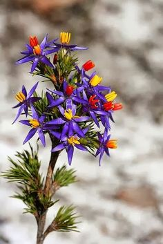 Purple Flowers - Great colors for beaded flowers
