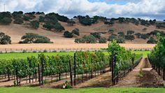 Santa Ynez Inn, the Santa Ynez Valley. Santa Barbara Real Estate, Santa Barbara County, Santa Ynez Wineries, Santa Ynez Valley, Girlfriends Getaway, Wine Country, Nature Pictures, Vacation Spots, Trip Advisor