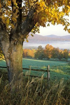 Pasture framed by maple tree at sunrise, Danby Four Corners, Rutland County, Vermont│Brad Mitchell Photography