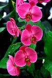 Orquídeas - Descarga De Over 49 Millones de fotos de alta calidad e imágenes Vectores% ee%. Inscríbete GRATIS hoy. Imagen: 6045124