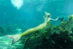 Find images and videos about beautiful, ocean and underwater on We Heart It - the app to get lost in what you love. H2o Mermaids, Mermaids And Mermen, Mermaid Images, Mermaid Pictures, Hogwarts, Spy Girl, Silicone Mermaid Tails, Water Aesthetic, Mermaid Drawings