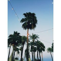 TBS Crew goes to Coachella! ❤ liked on Polyvore featuring backgrounds, pictures, summer, photos, blue, filler, saying, quotes, picture frame and phrase