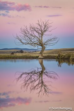 Reflection Photography, Tree Photography, Fractal Geometry, Morning Meditation, Lone Tree, Modern Witch, Fractals, Cool Pictures, Beautiful Places