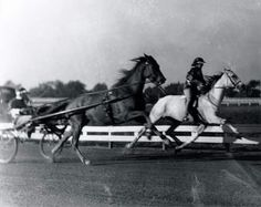 On September 27, 1940, Greyhound set his last world record with Frances Dodge Johnson trotting under saddle riding Greyhound covering the mile in 2:01.3/4 at the Red Mile in Lexington, Kentucky. This record stood for 54 years! And, yes, that is the same Frances Dodge who owned Wing Commander.