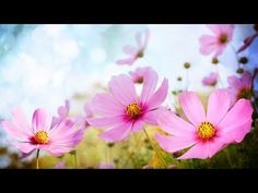 Relaxing Piano Music. is an Exellent Instrumental Background Healing Music for Study, Concentration, Stress Relief, Mind Relaxation, Yoga, Massage or Just Yo...
