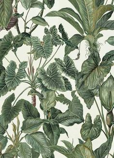 Erismann Paradiso Tropical Leaves Pattern Wallpaper Jungle Leaf Forest Textured per roll