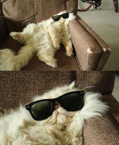 4. Un chat sur le canapé en lunette de soleil et un autre qui a trop picolé