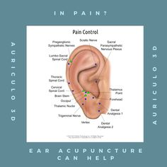 29 Ideas for piercing pain chart ear acupuncture points Ear Piercings Chart, Ear Peircings, Piercing Chart, Acupuncture Points, Acupressure Points, Ear Seeds, Ear Reflexology, Tattoo Pain Chart, Sciatic Nerve