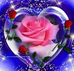 Beautiful Love Pictures, Beautiful Gif, Beautiful Roses, Flower Phone Wallpaper, Heart Wallpaper, Love Heart Images, Beautiful Nature Wallpaper, Purple Love, Pretty Wallpapers