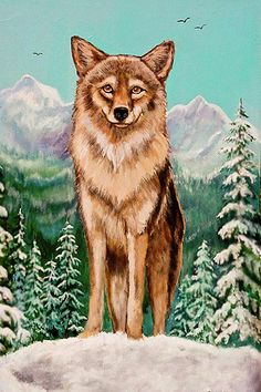 original artwork wiley coyote limited time promotion use code rzpdcn for a great discount on