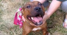Tilda is an adoptable Pit Bull Terrier Dog in Lansing, KS. Sweet and petite! Little Tilda comes to us by way of the shelter. When she was found she had a severely broken jaw and required surgery that ...