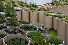Urban Gardens Also Grow Communities. Public Farm 1, by Work Architecture Company: a series of recyclable cardboard tubes that grows rainwater-irrigated veggies while providing solar-powered cell-phone charging and community playspace. At PS1 Contemporary Art Center, NY, 2008.