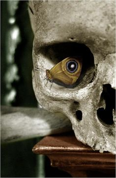 Beautiful moth/skull photo.  (from The Black Hat Society)