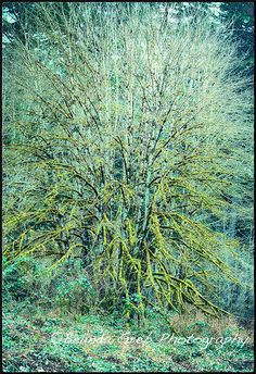 Belinda Greb, Photographer - Trees in Blue and Green