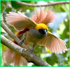 Unduh 97+ Gambar Burung Yg Indah Paling Baru Gratis