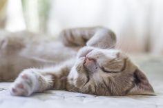 Sweet dreams by Paula Butler on 500px