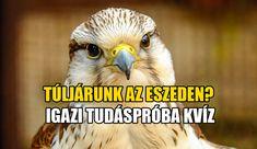 Owl, Animals, Animais, Animales, Animaux, Owls, Animal