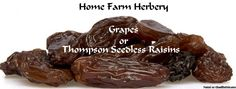 Jumbo Thompson Seedless Raisins, Order now, FREE shipping     Home Farm Herbery plump raisins are giant, the largest around! Our jumbo Thompson seedless raisins are about two to three times the size of a regular raisin, because they ripen on the vine for a long time while they achieve maximum delicious sweetness.     These beauties grow as green grapes on the vine, and develop this lovely dark brown color naturally while drying in the sun. They're perfect as a snack, and t...
