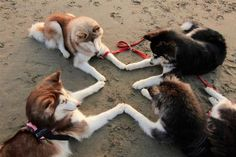 Paws together! - Imgur