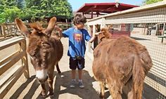 Groupon - $ 22 for a Petting Zoo Visit for Four with Train Rides for Two at Zoomars ($46 Value) in San Juan Capistrano. Groupon deal price: $22