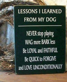 Non smettere mai di giocare, scodinzola di più e abbaia di meno. Sii leale e fedele. Perdona in fretta e ama incondizionatamente.