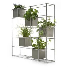 Awesome room dividers/natural indoor oxygen boosters ;)