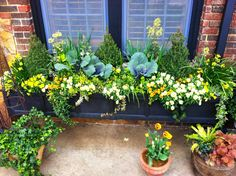 Window Box Planting and good idea for my winter annuals// group together.