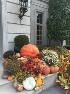 gorgeous-green-and-white-pumpkins