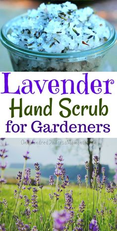 Gardener's Lavender Hand Scrub Recipe, Hand Scrub Recipes, Lavender Recipes, Lavender Essential Oils, Garden Scrubs,
