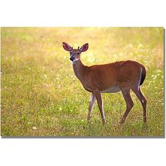 Trademark Art Young Buck Canvas Wall Art by MCat, Size: 16 x 24, Multicolor