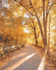 "7,655 Likes, 84 Comments - Jacob Santiago (@jacobsantiago) on Instagram: ""A Walk in the Park"""