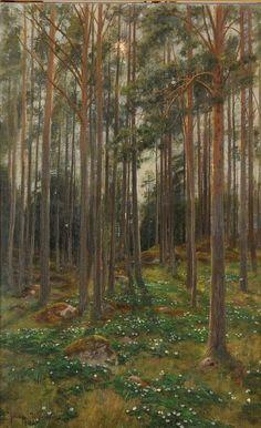 Johan Krouthén (1859-1932): Skog 1903