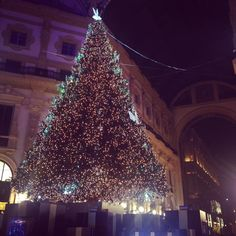 #christmas#christmas2015#xmas#christmastree#xmastree#christmasmagic#magic#lights#shining#milano#milan#milanocity#milanodavedere#milanodabere#galleriavittorioemanuele#galleria#themostwonderfultimeoftheyear#follow#f4f#like#l4l#picoftheday by maryka_russo