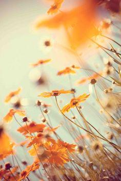 """Orange flowers in a field. """":O)"""