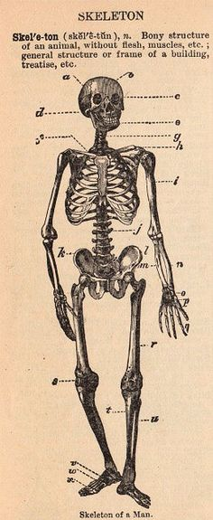Vintage Graphic - Spooky Skeleton - The Graphics Fairy