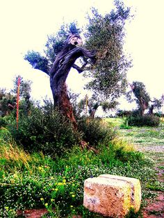 The stone & the tree | Flickr - Photo Sharing!