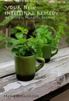 The Homestead Survival | How to Use Peppermint to Cure Stomach Ailments | http://thehomesteadsurvival.com