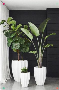 Gorgeous Plants Featuring a unique rippled design, Allia Concrete Planters can be inserted with lush greenery to add interest to both gardens or indoor spaces Plantas Indoor, House Plants Decor, Indoor Plant Decor, Indoor Green Plants, Indoor House Plants, Plants In The Home, Outdoor Potted Plants, Big House Plants, Large Indoor Planters