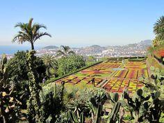 """madeiran yksi käytetyimpiä kuvaus paikkoja on kasvitieteellisen puutarhan """"dominon"""" yli  eikä suotta."""