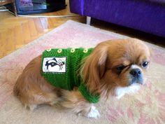 My sweet dog Otis new sweater I knitted it for him.. :))
