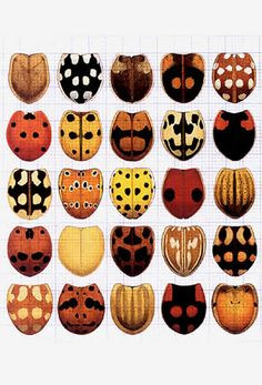 37 different Ladybird Beetles from Switzerland Watercolor, 1976 - 1981 by Cornelia Hesse-Honegger: she wondered whether the insects living in the environs of Swiss nuclear power plants, which emit significantly lower levels of radiation than the fallout from Chernobyl, would therefore be healthy. In 1989 Cornelia made her first trip to collect leaf bugs in the environs of the Swiss